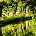 natur_skov_vand_flod_graes