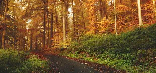 veganisme_vej_skov_forest_woods_path