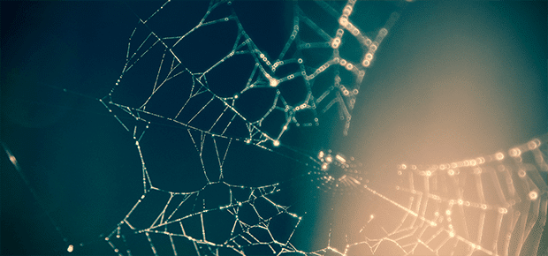 net-netvaerk-network-web